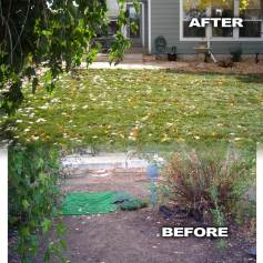 Before and After Back Yard Renovation