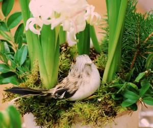 Multiflorahyacint m fågel (3)