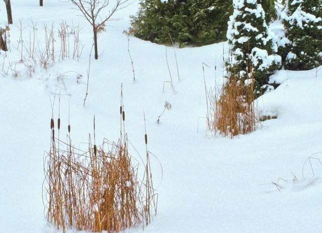 Kaveldun i snö