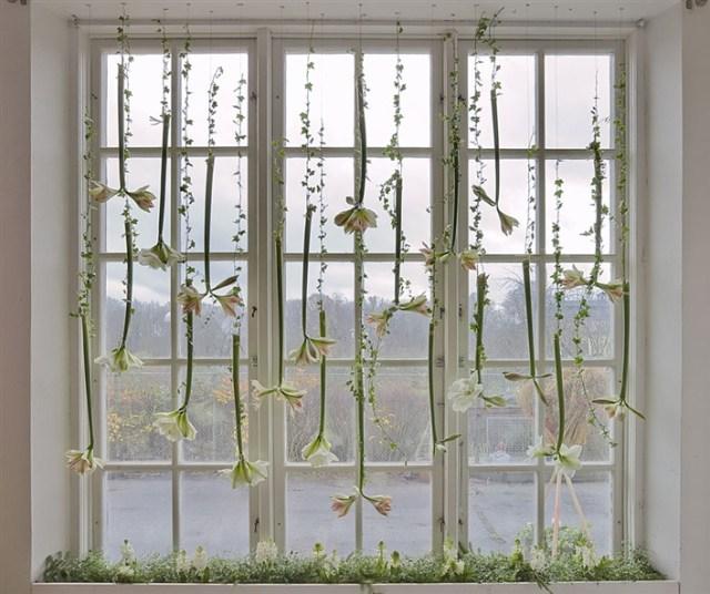 Bild: Blomsterfrämjandet