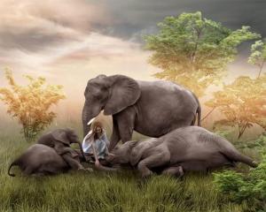 Kvinna elefanter