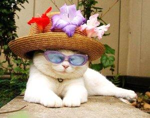 Katt hatt