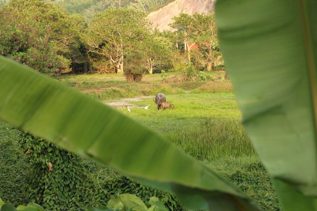 thailande-2013-19