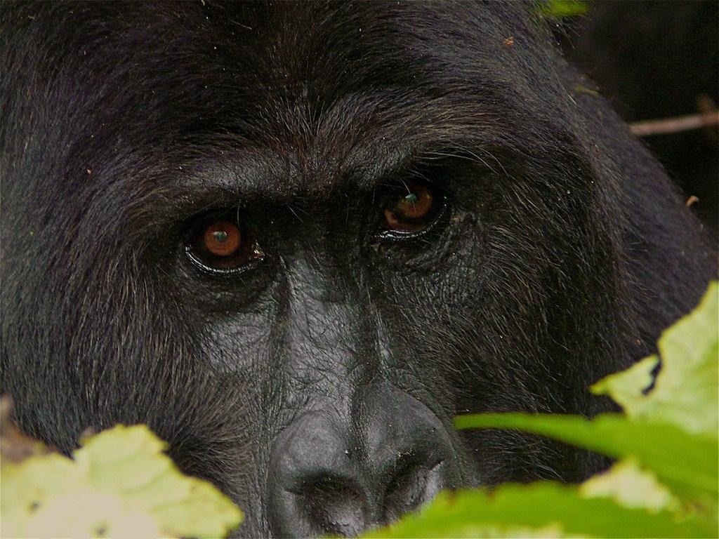 Congo mai 2008