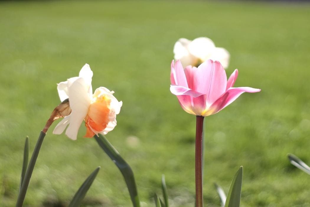 ventre-digestion-flore