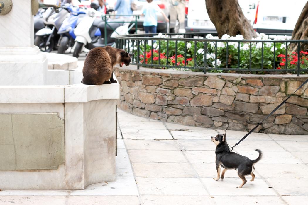 J'emmène mon chien en vacances depuis plusieurs années car lui aussi à droit de se changer les idées ! C'est le moment pour faire de longues balades, jouer, passer beaucoup de temps avec lui. Dans cet article je partage mes conseils pour partir serein avec son chien.