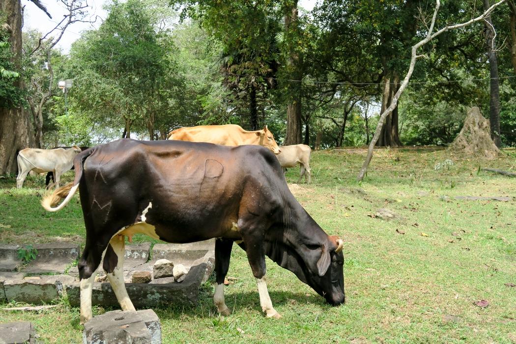 sri-lanka-circuit-polonnaruwa04