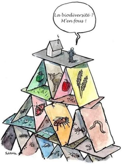 Collapsologie : notre génération va-t-elle vivre la fin du monde ? Pyramide-biodiversite.jpg?zoom=1