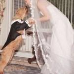 cane al tuo matrimonio 1
