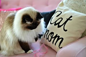 cat subscription box, meowbox