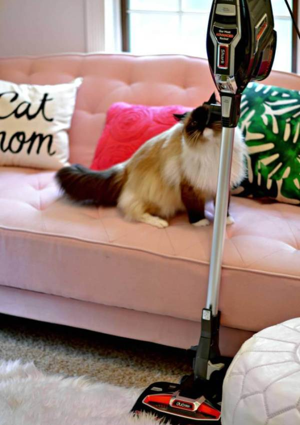 The One Vacuum Every Pet Owner Should Own