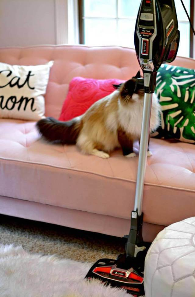 10 Spring Cleaning Tips & Tricks to Master the Mess (in 1 afternoon)