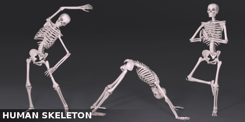 Human skeleton in motion how to improve your posture