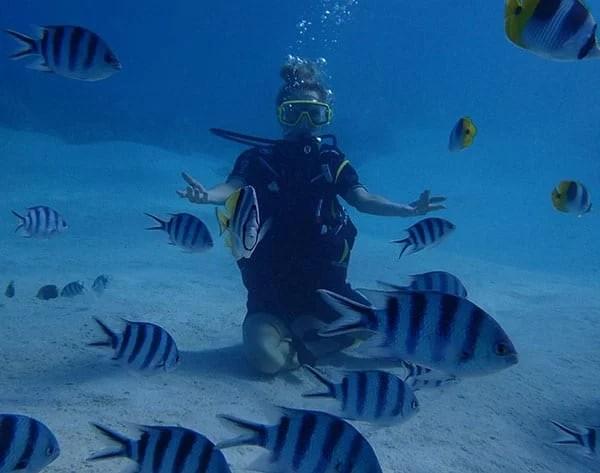 diving excursion conrad bora bora eve dawes underwater fish