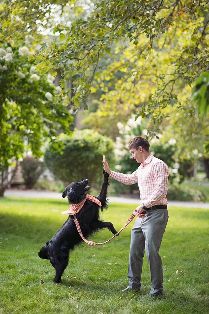 dog ring bearer | Tammy Swales | Glamour & Grace