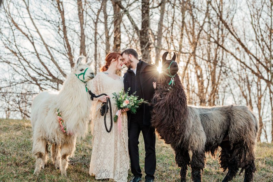 Llama Wedding Shoot