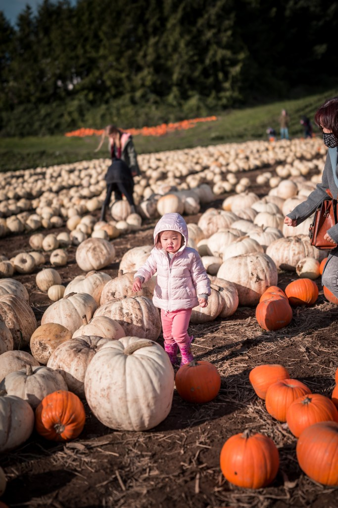 Adelina at Maan Farm with pumpkins shot with Huawei P40 Pro aperture mode