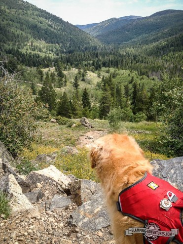 Daisy taking in the view. Indian Peaks Wilderness.