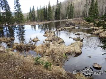 Beaver pond along FR126. Kenosha Pass, CO
