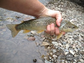 The only brown trout caught during the trip.