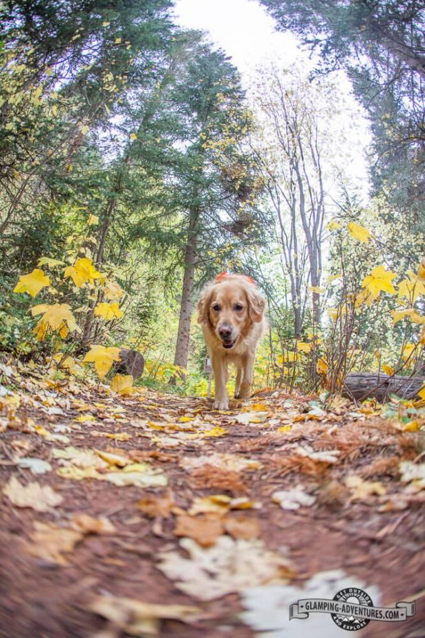 Best hiking companion ever! West Brush Creek Sylvan Lake S.P.