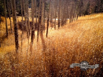 You can't beat the colors along Mule Deer Trail. Golden Gate Canyon S.P.