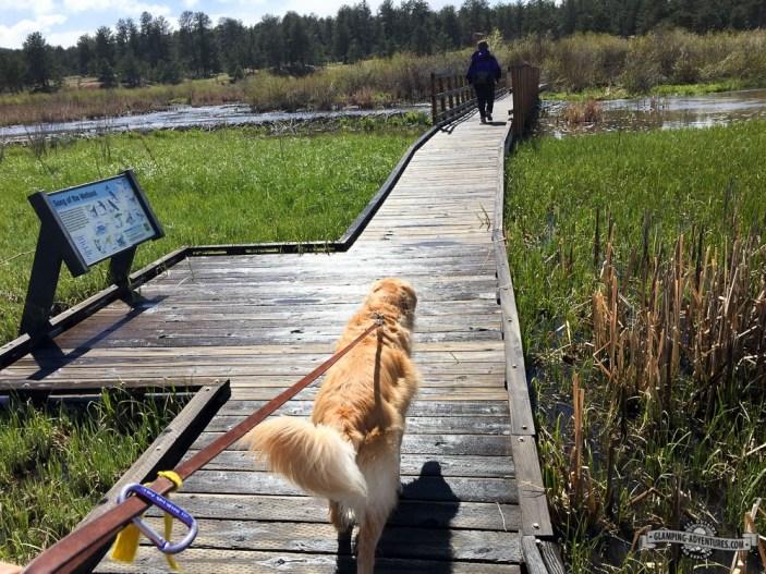 Board walk next to beaver dams.