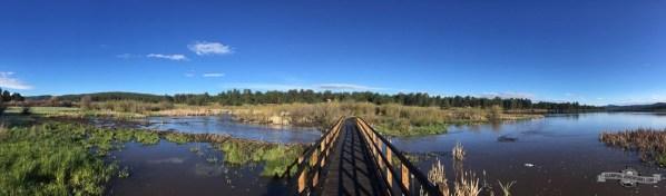 Boardwalk next to beaver dams