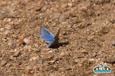 Butterfly. CO Trail. Kenosha Pass, CO.