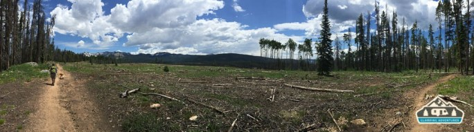 Clear cutting due to the pine beetle. Lost Lake Trail, Vail CO.