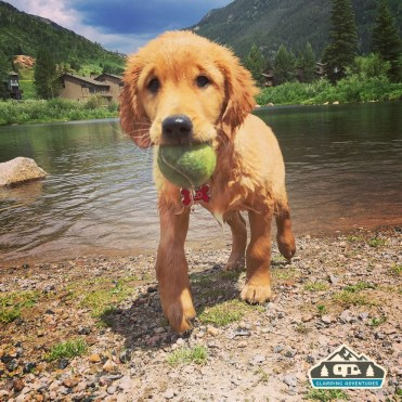 Sweet puppy that we met at the West Vail Dog Park. Vail CO.
