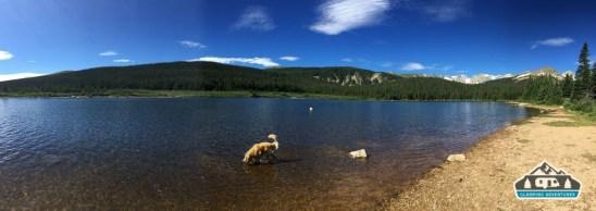 Daisy cooling off. Brainard Lake, CO.