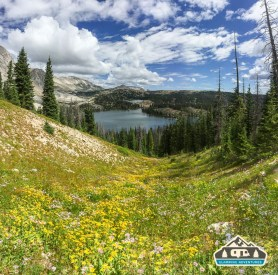 Wildflowers above Lake Marie.