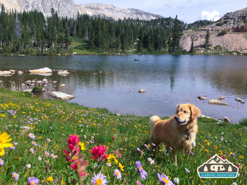Playing in the flowers while I float around Lake Marie, WY.