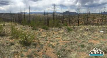 Acres and acres of burned pine trees. Westcreek Rd., CO.