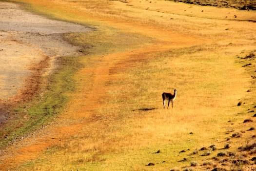 07-PatagoniaGuanco-honeytrek