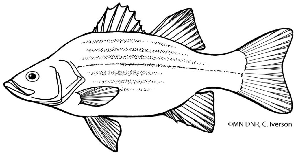 Coloring Pages : Great Lakes Aquarium