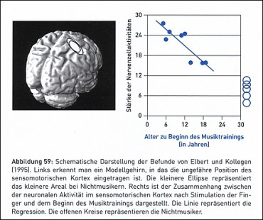Grösserer sensomotorischer Hirn-Kortex bei Musikern
