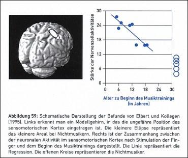 Größerer sensomotorischer Hirn-Kortex bei Musikern