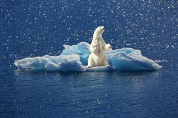 Erderwärmung - Klimakatastrophe - Polabschmelzung - Eisbär - Eisschmelze - Glarean Magazin