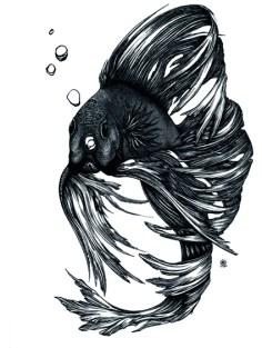 Corinna Naumann - Kampffisch   Tuschezeichnung   23x30.5cm   2014