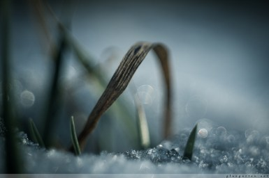 Winter_Impressionen_2017_00010
