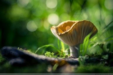 Pilz, Natur, Fotografie