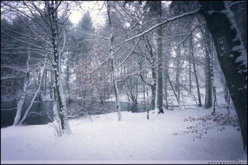 Försterteiche, Lemgo, Lemgoer Mark, Natur, Winter, Schnee, Winterwunderland, Lippe