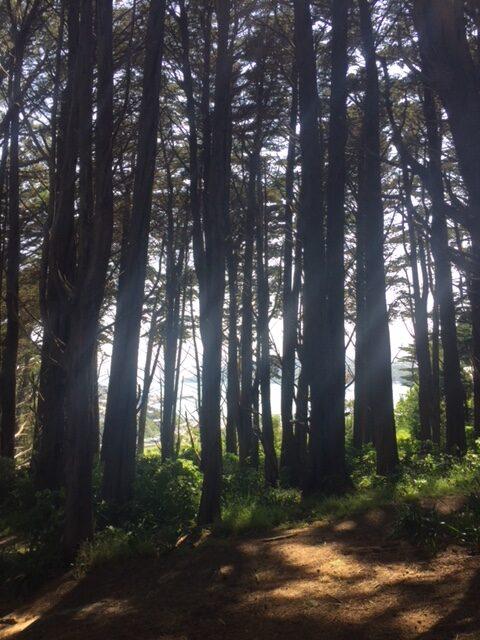 Transitions (Wellington Southern Walkway, NZ)