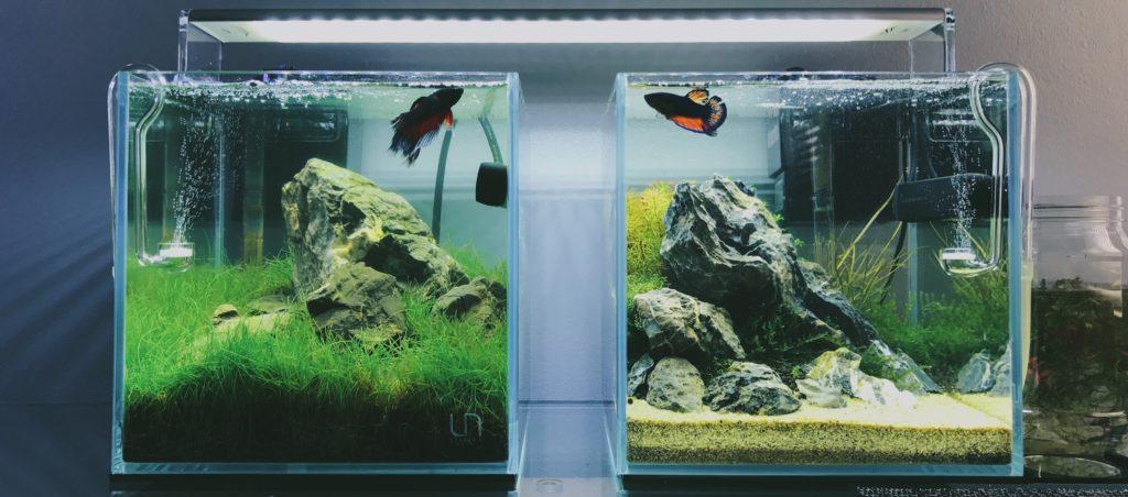 Ultum Nature Systems 20c Planted Betta Fish Tank Gallery
