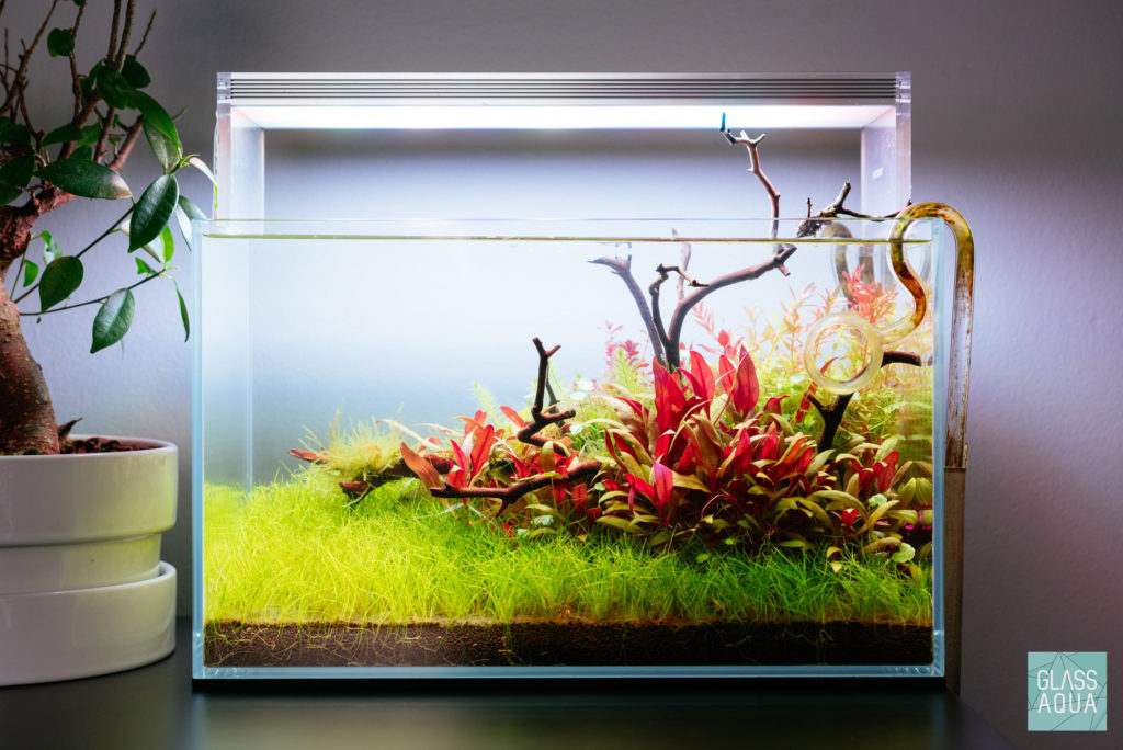 Ultum Nature Systems 5N Planted Nano Tank Gallery  Glass Aqua