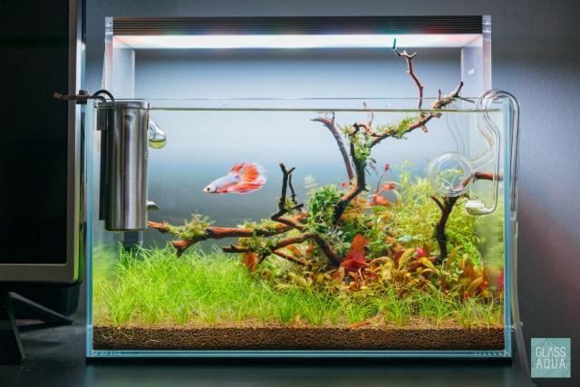 Planted Betta Tank