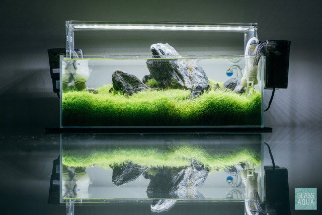 dry start method guide for planted aquariums glass aqua