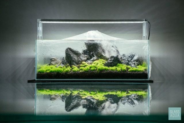 Dry Start Method Guide For Planted Aquariums - Glass Aqua
